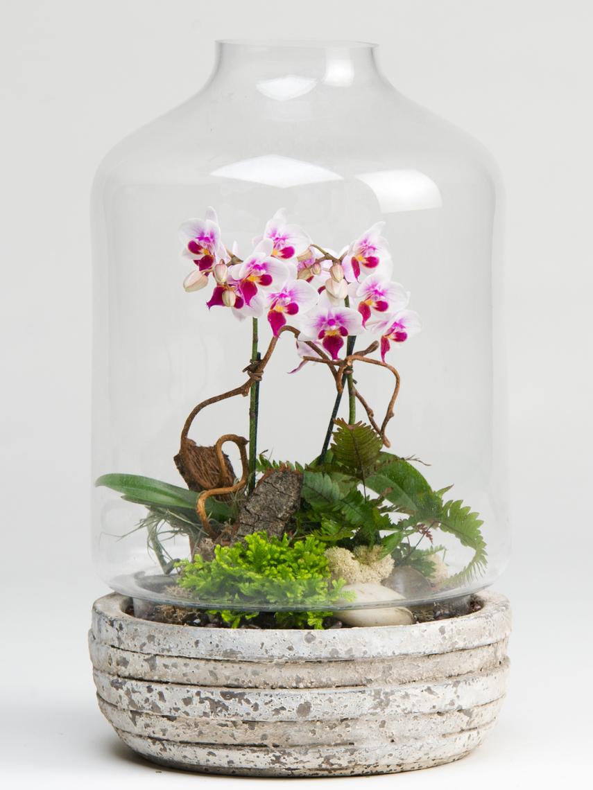 zoom_orchidterrariumplant-15031041509